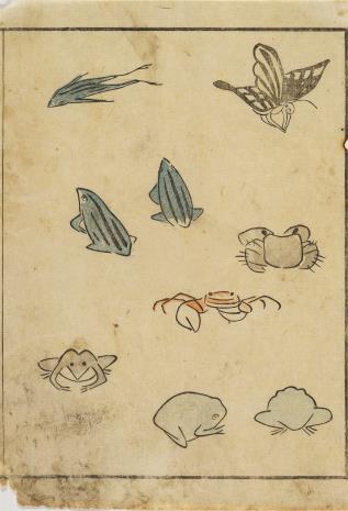 nieznany, Szkice żab, krabów, motyla