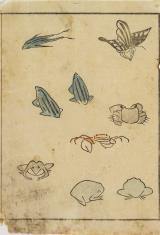 Szkice żab, krabów, motyla