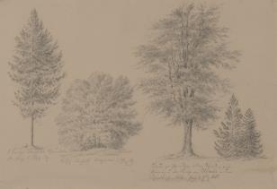 Drzewa i krzewy (dokumentacja botaniczna)