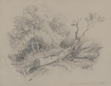 Amelie  Herbst, Ścięte drzewo