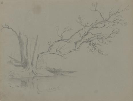 August von Wille, Uschnięte drzewo nad brzegiem rzeki