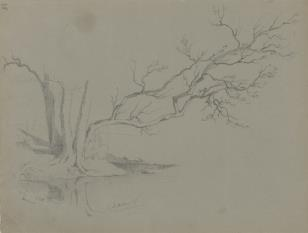 Uschnięte drzewo nad brzegiem rzeki