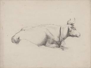 Krowa z dzwonkiem na szyi