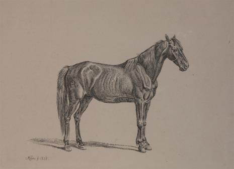 Johann Adam Klein, Koń