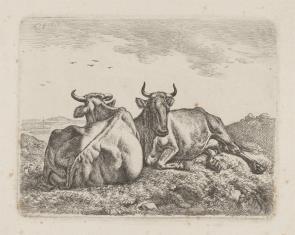 Dwie krowy leżące na pastwisku