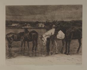 Konie u wodopoju
