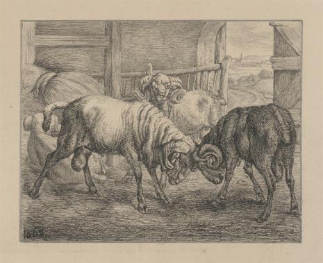 Johann Adam Klein, Dwa walczące barany