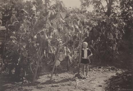 Jan Bułhak, Halina Bułhak ze słonecznikami