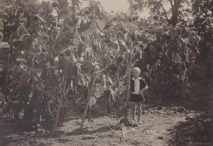 Halina Bułhak ze słonecznikami