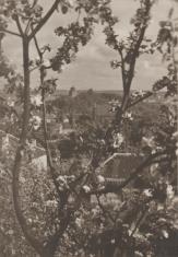Widok z ogrodu kościoła Misjonarzy na Górę Zamkową