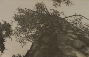 Mazury 1949
