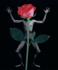 Libera i kwiaty nr 7