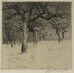 Drzewa w zimie