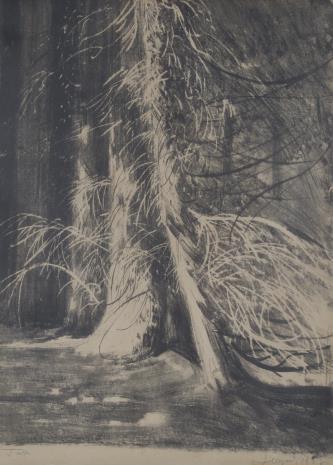 Leon Wyczółkowski, Drzewa w Gościeradzu