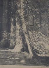 Drzewa w Gościeradzu