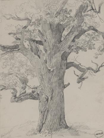 nieznany, Drzewo
