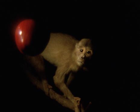 João Maria Gusmão / Pedro Paiva, Darwin's Apple, Newton's Monkey / Jabłko Darwina, małpa Newtona
