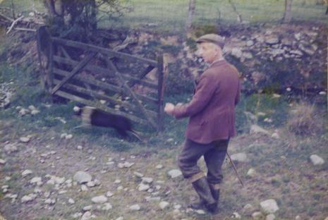 Derek Boshier,   Sheep-Llangdafan, Walia, z cyklu: Trasy