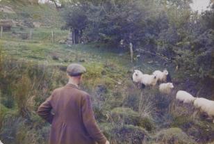 Sheep-Llangdafan, Walia, z cyklu: Trasy